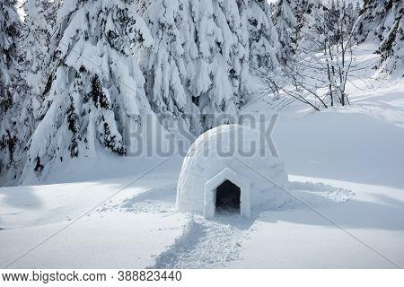 Real snow igloo house in the winter Carpathian mountains. Snow-covered firs on the background. Landscape photography