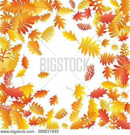 Oak, Maple, Wild Ash Rowan Leaves Vector, Autumn Foliage On White Background. Red Orange Yellow Ash
