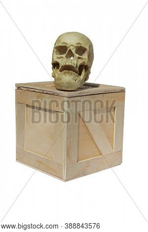 Human Skull. Halloween Human Skull on a wooden shipping crate. isolated on white. Room for text.