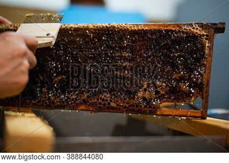 Beekeeper Removes Excess Beeswax With The Scraper By Hand, Preparing For Pumping Honey. Beekeeper Wo