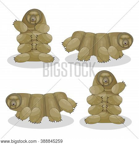 Brown Isolated Happy Quirki Cute Cartoon Vector Tardigrade Is Sitting, Running, Jumping On White Bac