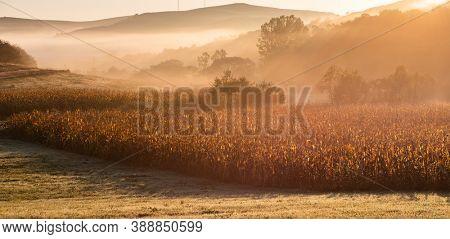amazing panorama of golden corn fields in autumn sunrise
