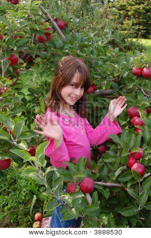 Apple Orchard 043
