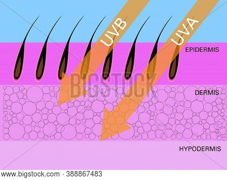 Skin Compare , Protect Both Uva And Uvb, Vector Design.