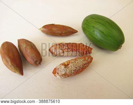 Cracked Nuts From The Japanese Torreya, Torreya Nucifera