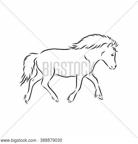 Vector Hand Drawing Pony Isolated On White Background, Pony Horse, Vector Sketch Illustration