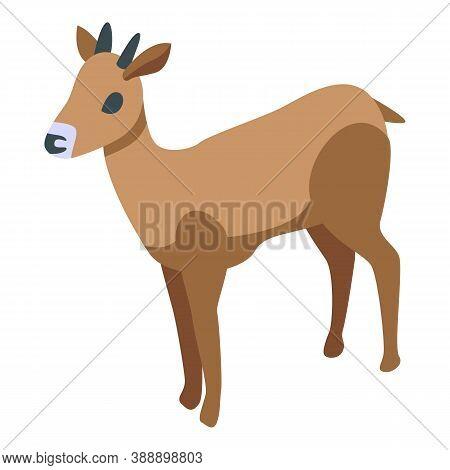 Oryx Gazelle Icon. Isometric Of Oryx Gazelle Vector Icon For Web Design Isolated On White Background