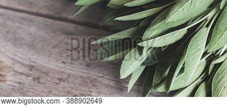 Sage Leaf Bouquet. Sage On A Wooden Background.