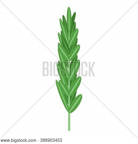 Rosemary Leaf Icon. Isometric Of Rosemary Leaf Vector Icon For Web Design Isolated On White Backgrou