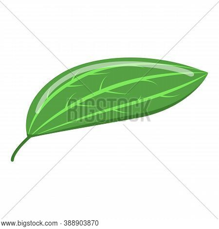 Cinnamon Leaf Icon. Isometric Of Cinnamon Leaf Vector Icon For Web Design Isolated On White Backgrou