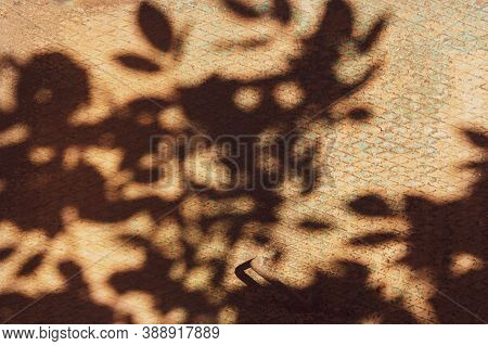 Shadow Of Branch On The Old Steel Plate With Rhombus Shapes Pattern. Iron Rusted Surface With Shabby