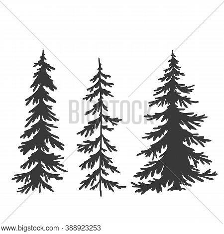 Spruce Tree Set, Vector Hand Drawing, Silhouette
