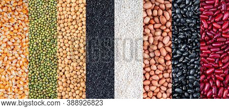 Multicolor Dried Legumes For Background. Different Dry Bean For Eating Healthy. A Variety Of Beans.