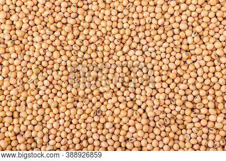 Yellow Soybean Grain. Top View Soybean Pattern As For Background. Raw Dehydrated Soybeans Texture Ba