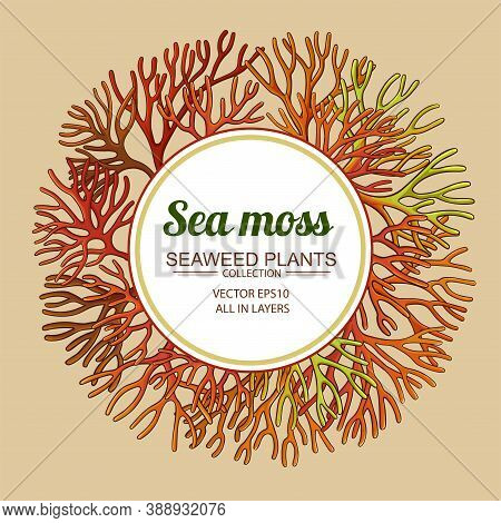 Sea Moss Plant Frame On Color Background