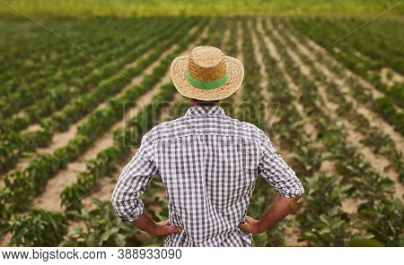 Back View Of Unrecognizable Male Farmer In Checkered Shirt And Straw Hat Standing Against Large Plan