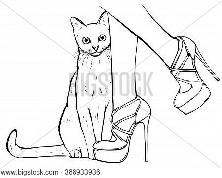 Cat Looking Up At Beautiful Female Legs In Colorful Fashionable High Wedge Leather Sandals On White