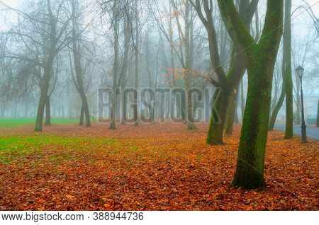 Autumn November landscape. Autumn in the city park. Bare trees and orange fallen leaves on the ground, autumn park scene. Foggy autumn landscape, autumn scene, colorful autumn park view