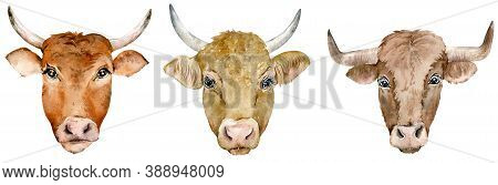Watercolor Set Of Horned Cow And Bull Heads Of Different Breed. Year Of The Ox 2021. Farm Animals. O