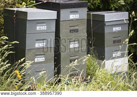 Beehives And Bees In Apiary In A Botanical Garden In Wellington, New Zealand. Beekeeping Or Apicultu
