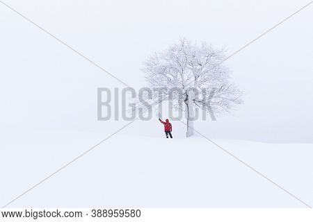 Amazing landscape with a lonely snowy tree in a winter field. Minimalistic scene in cloudy and foggy weather