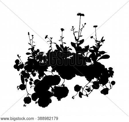 Vector Pot Marigold (calendula Officinalis) And Indian Cress - Garden Nasturtium - Monks Cress (trop