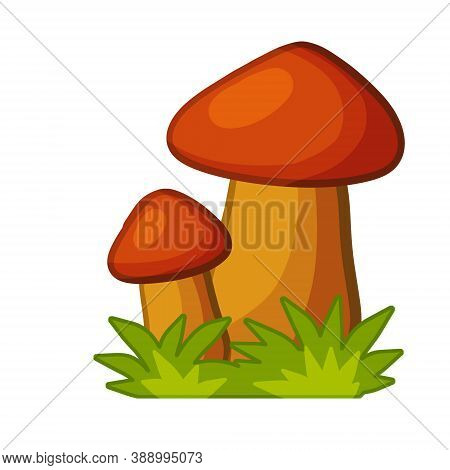 Mushrooms. Autumn Element Of Forest And Nature. Natural Food. Green Grass. Detail For Background Of