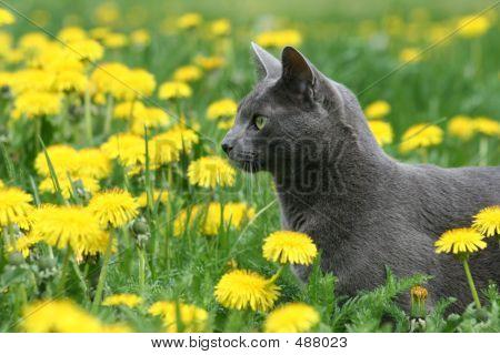 Cat In Dandelions