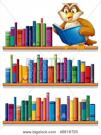 Illustration of an owl above the wooden bookshelves with books on a white background