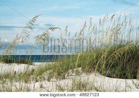 Beautiful Beach Morning