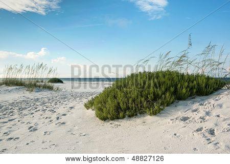Florida Beach With Beach Rosemary