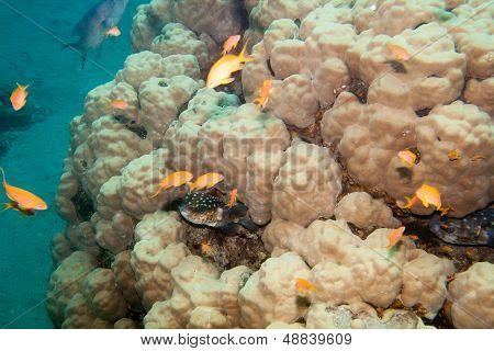 Coral reef is underwater in Red sea