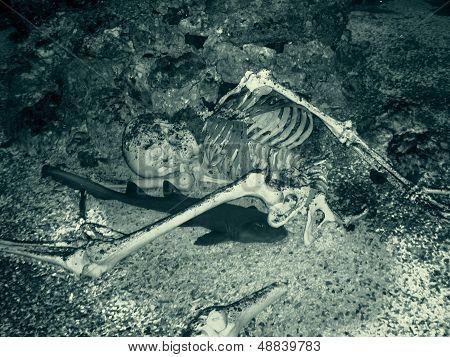 Sceleton