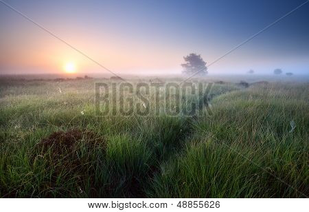 Path Through Grass In Misty Sunrise