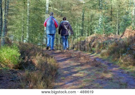 Forest Walk 2