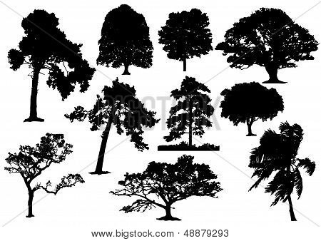 Trees Silhouette 003