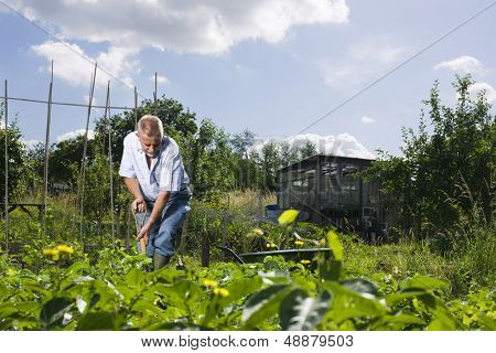 Active senior man working in allotment