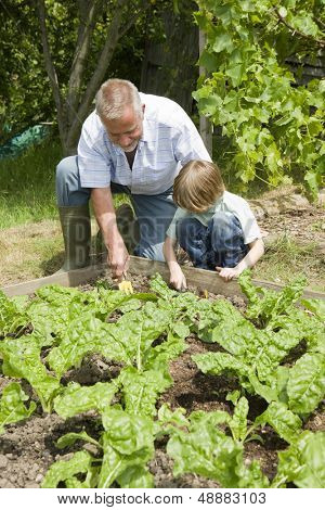 Young boy with grandfather gardening in community garden