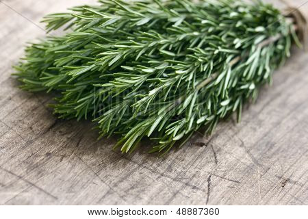 Green Fresh Rosemary Herbs