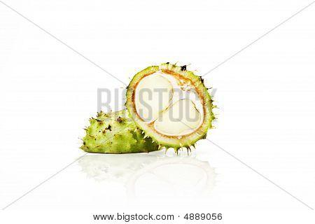 Conker Horse-chestnut