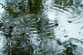 Drops rippling in a puddle - Rainy weather poster