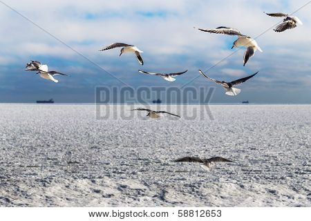 Blocks Of Ice Frozen Sea And Seagulls