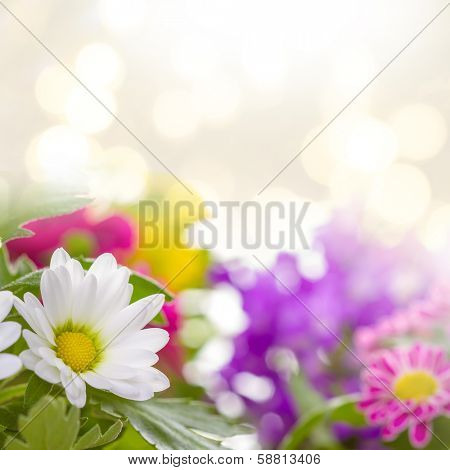 Lila and white flowers background. Real photographs of beautiful flowers.