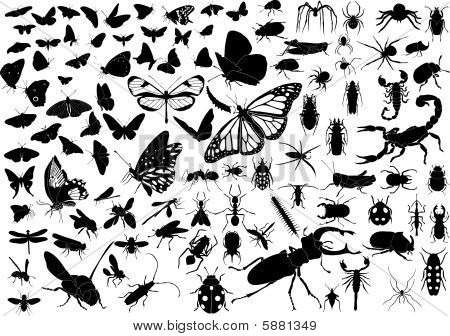 100 vector silhouettes of insects (butterflies, bugs, flies, bees ets.) poster