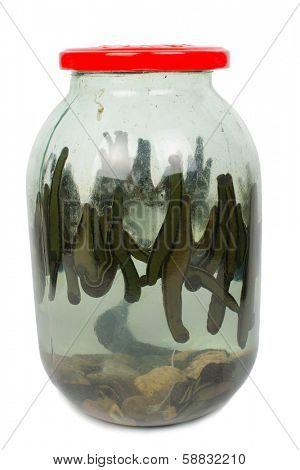Leech in a glass jar