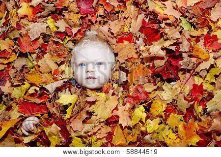 Baby in Pile of Leaves