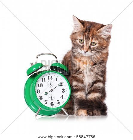 Adorable kitten with green alarm clock, isolated on white background