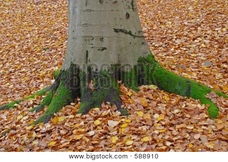 Autumn Tree Trunk