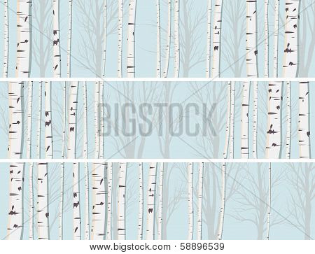 Horizontal Banners Of Birch Trunks Forest.
