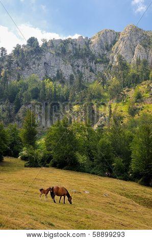 Horses in the mountain of Sinjajevina, Montenegro